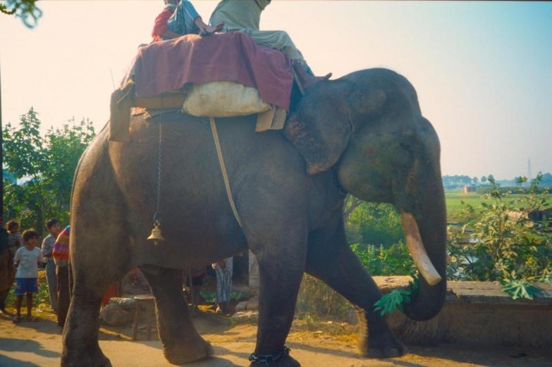 Elephant, Bihar