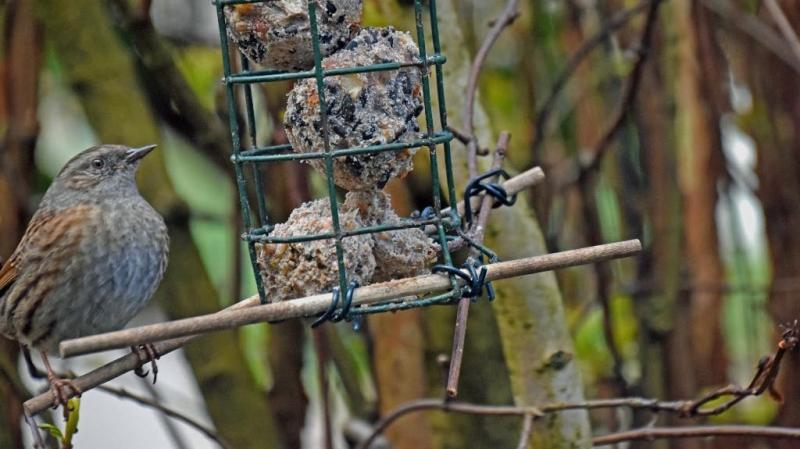 sparrow 002